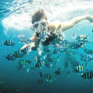 Snorkeling bersama ikan ikan