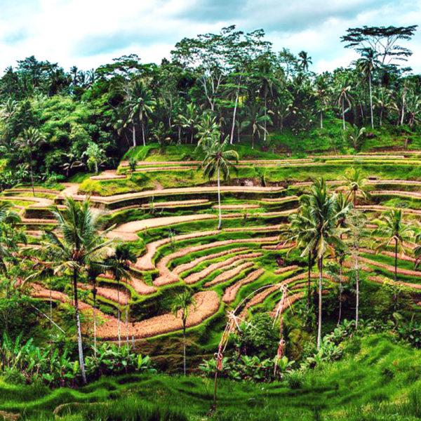 Bali 4D3N